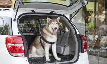 เทคนิคเดินทางกับ 'สุนัข-แมว' ให้ปลอดภัย!