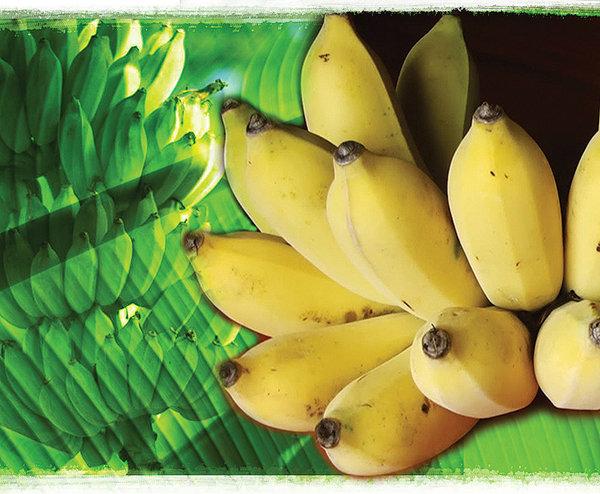 """""""กล้วย"""" พืชประโยชน์สารพัดนึก แต่หากบริโภคไม่คิด มีสิทธิ์ถึง """"ตาย"""""""