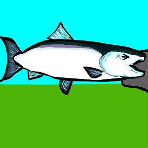 เกมส์เลี้ยงปลา Salmon Survival