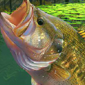 เกมส์ตกปลา เกมส์ตกปลาในสระใหญ่