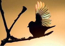 สามวิธีง่ายๆ ในการถ่ายภาพนกให้สวยงาม