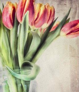 สุดยอดเคล็ดลับ เพื่อเพิ่มทักษะ ในการถ่ายภาพ ดอกไม้ของคุณ