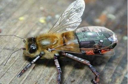 จับแมลง(จริง) มาบังคับวิทยุ