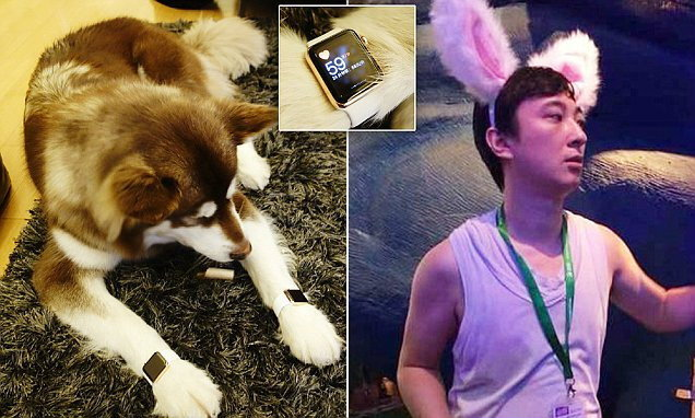 มหาเศรษฐีชาวจีนซื้อ Apple Watch Edition สีทองให้น้องหมาใส่ 2 เรือน ราคาเกือบล้าน !
