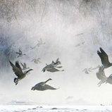 Cold Morning Flight