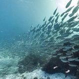 ภาพถ่าย Street View ใต้ท้องทะเลเม็กซิโก