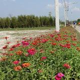 ตัวอย่างภาพถ่ายจาก Sony RX100 V
