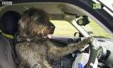 """โรงเรียนฝึกน้องหมา""""ขับรถ""""เปิดแล้ว???"""