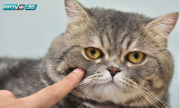 ผู้ชายเลี้ยงแมว.. เขาว่าน่ารัก ?