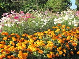 น่าไป! เทศกาลไม้ดอกเมืองหนาว อำเภอภูเรือ จังหวัดเลย ปี 55