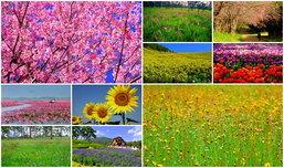 10 ที่เที่ยวชมดอกไม้สวยสุดๆ ในเมืองไทย