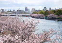 """ชี้จุด ชม """"ซากุระบาน"""" บนเส้นทางสาย Osaka-Kyoto-Hokuriku"""