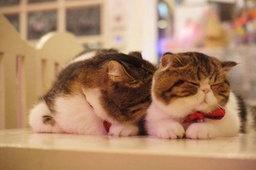 เอาใจคนรักหมาแมวกับ ' 14 คาเฟ่..เจ้าขนฟู ' ทั่วกรุงเทพฯ