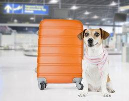 """""""การบินไทย"""" รักคุณเท่าฟ้า..รักสัตว์เลี้ยงเท่าคุณ อนุญาตให้ขนส่งน้องหมาได้"""