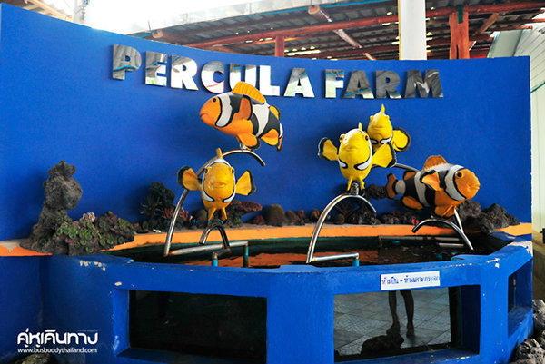 อาณาจักรปลาการ์ตูน เพอคูล่า ฟาร์ม