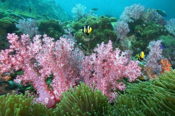 อุทยานแห่งชาติหมู่เกาะสิมิลัน เพลิดเพลินกับกิจกรรมคลายร้อน