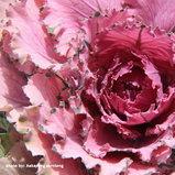 สีสันดอกไม้ในเมืองไทย