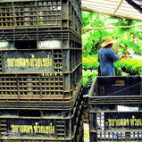โครงการพัฒนาตามพระราชดำริ โครงการหลวงห้วยเขย่ง จ.กาญจนบุรี