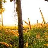 ฮักเมา เชียงรายเมืองในสายหมอก