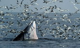 ชมนก ดูวาฬ ละลานตาหิ่งห้อย @ เพชรบุรี