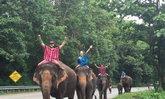ฟาร์มช้างภัทร Patara Elephant Farm