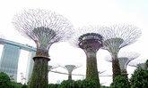 เที่ยวสิงคโปร์ เดิน Garden แบบคนรักธรรมชาติต้องไปให้ถึง