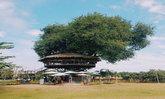 """""""ร้านเก๊ามะขามกาแฟ"""" ร้านกาแฟบนต้นมะขาม แลนด์มาร์คใหม่ จุดชมวิว Unseen 360 องศา"""