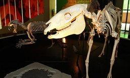 รวมพลคนรักไดโนเสาร์ ตะลุยโลกล้านปี สัมผัสอารยธรรมแดนอีสาน