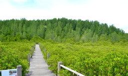 'ทุ่งโปรงทอง' แหล่งท่องเที่ยวเชิงอนุรักษ์ที่ให้ความรู้เรื่องระบบนิเวศป่าชายเลน