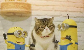 """ทาสแมวต้องโดน!! ... """"8 ร้านคาเฟ่แมวน้อย"""" สุดน่ารัก @ BKK"""