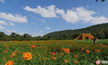 """ชมทุ่งดอกไม้..เรียนรู้วัฒนธรรม """"มังมุน บุญข้าว"""" : จิม ทอมป์สัน ฟาร์มทัวร์ 2558"""