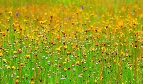 กาลครั้งนั้น...ความฝันผลิบาน 10 สถานที่ดูดอกไม้สะพรั่งทั่วไทย