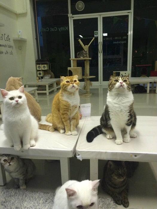 """ทาสแมวต้องโดน!! ตามรอย """"8 ร้านคาเฟ่แมว"""" สุดน่ารัก"""