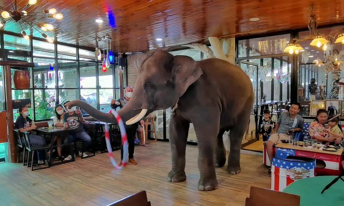 เจษฎาฟาร์ม ราชบุรี ไอเดียบรรเจิด จัดแสดงช้างแสนรู้ถึงโต๊ะอาหารที่เดียวในโลก