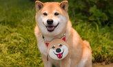 Marutaro น้องหมาที่มีคน Follow ig มากที่สุดในโลก