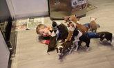 ความสุขของเด็กน้อย เมื่อมีเจ้าตูบสุดน่ารัก16ตัวในบ้าน