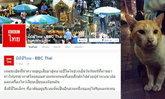"""บีบีซีไทยรายงานชีวิตเล็กๆ เมื่อ """"เจ้าเสือ"""" แมวขาประจำกลับมาที่ศาลพระพรหมเอราวัณ"""