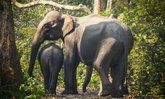 คุณปรบมือให้ช้างแสนรู้ แต่อาจไม่รู้ว่าเขาถูกทรมานขนาดไหน