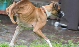 มีแค่ 2 ขาก็ไม่แคร์! สุนัขพิการผู้ร่าเริง ที่มีแฟนบนอินสตาแกรมกว่า 8 หมื่น