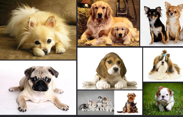 10 อันดับพันธุ์สุนัขน่าเลี้ยง
