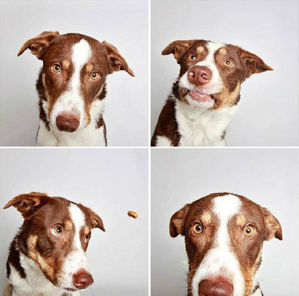 ภาพถ่าย Photobooth น้องหมา 4 ภาพ 4 แอคชั่น น่ารักระเบิดเถิดเทิง