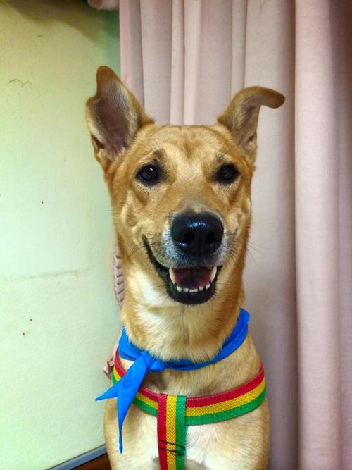 น่ารัก! งานแต่งงานสุนัขไทยคู่แรกของประเทศ